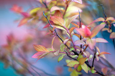 Spring Leaves by RSable