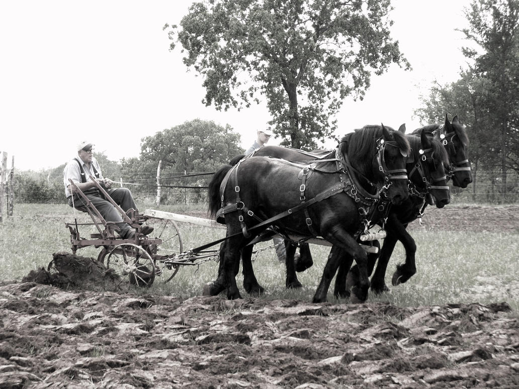 Horse Plow by Chris01125 on DeviantArt - photo#2