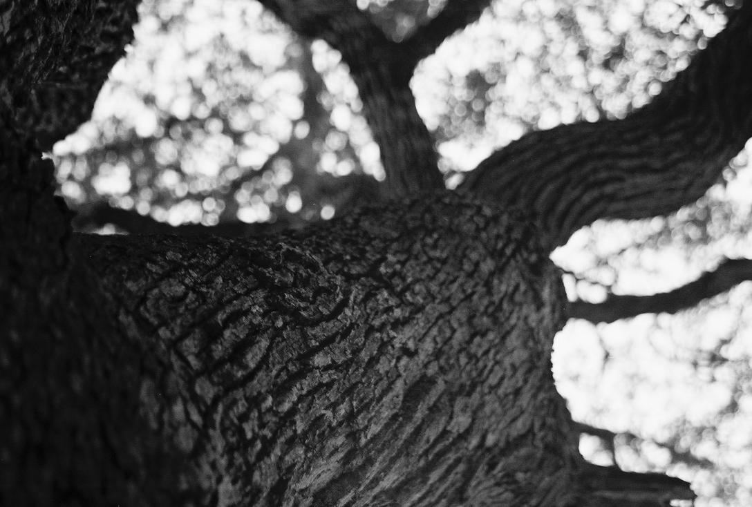 Up The Tree- B and W by Chris01125