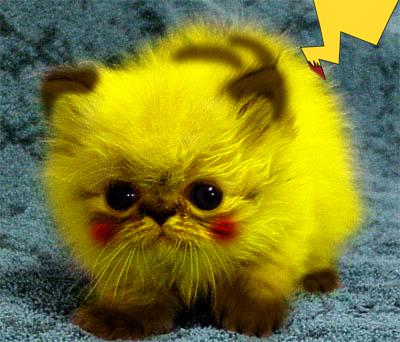 Cat painted like pikachu