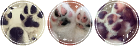 puppy paw divider // f2u by foxnibbles