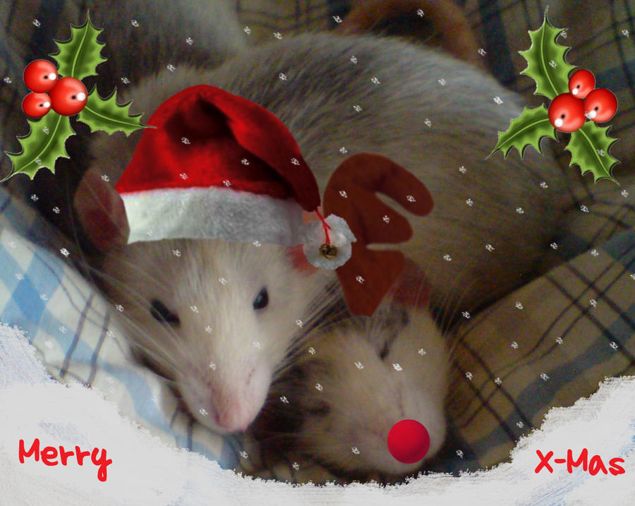 Christmas Rats by Liliana-san on DeviantArt