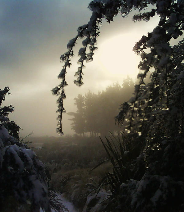 Snowdrops by Clair3Su3