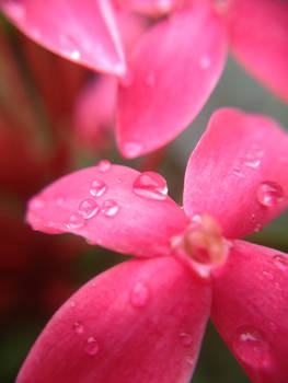 Pearls After the Rain