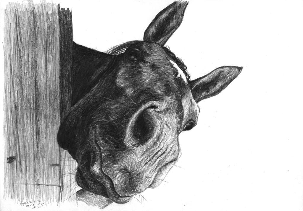 Filon - horse by kakuyaa