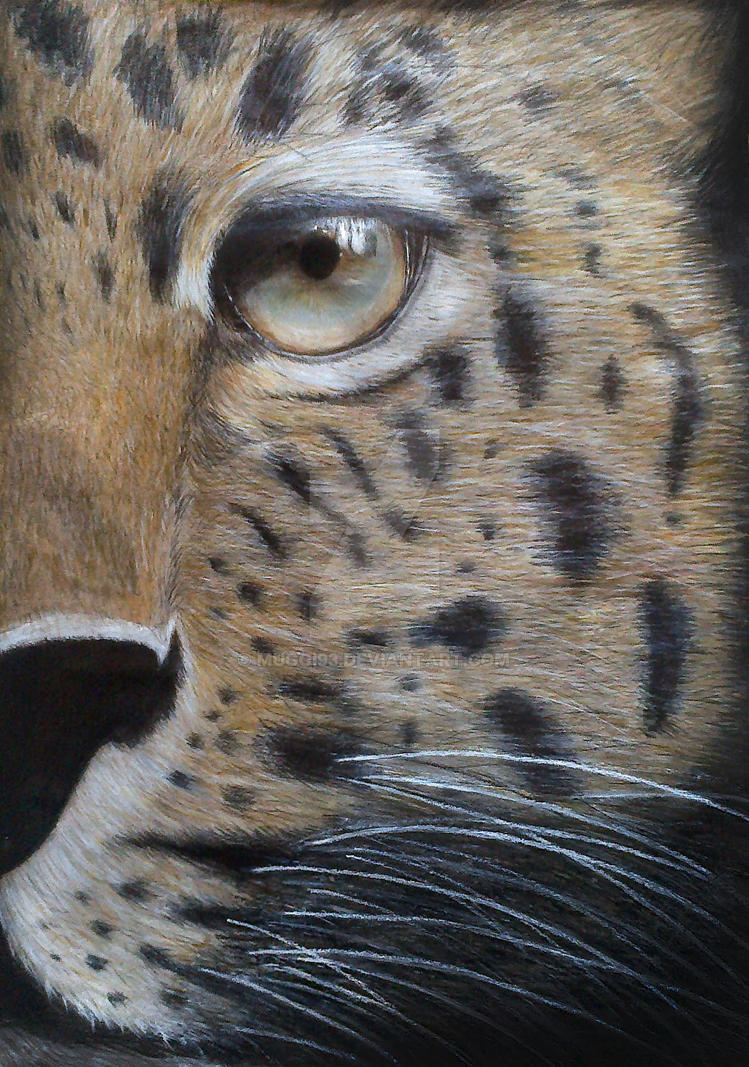 Leopard drawing by Muggi93
