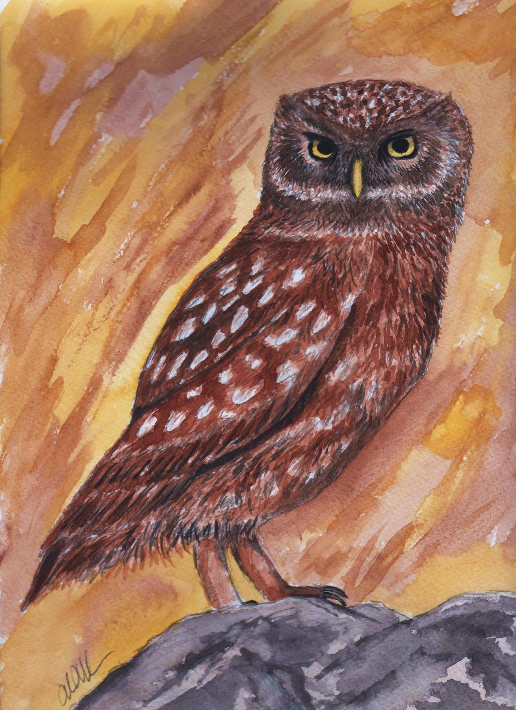 Owl Watercolor by peimar