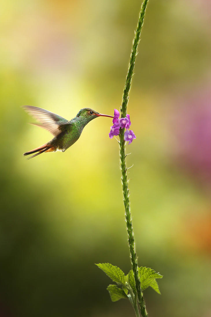 Hummingbird the 1st by RadekDemjan