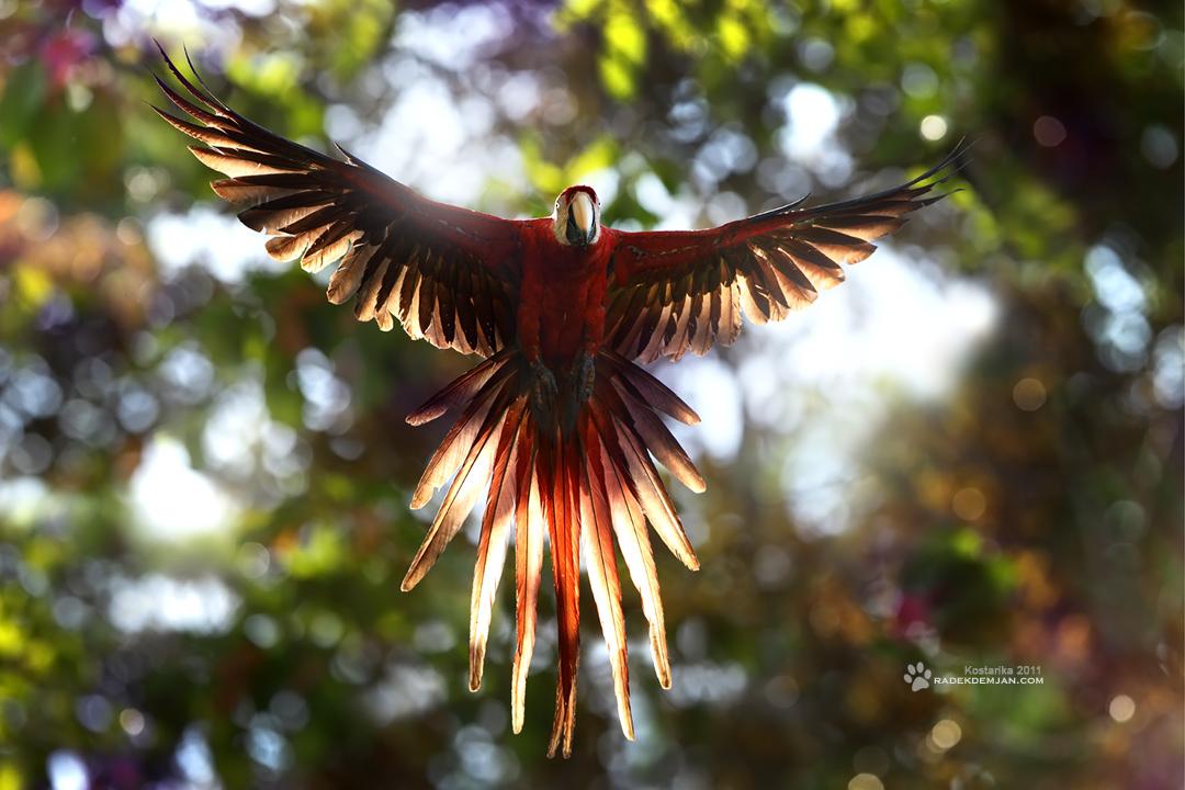 Costa Rica Angel by RadekDemjan
