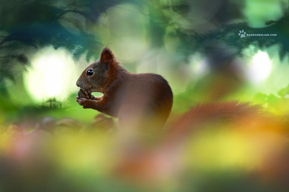 Nuts story by RadekDemjan