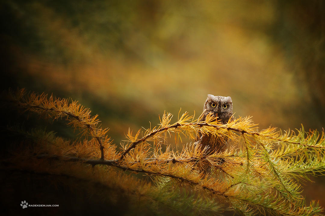 Just a little one.. by RadekDemjan