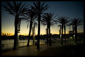 Long Beach Nights by wackycracka