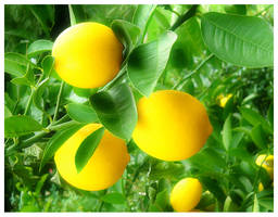 Lemons by wackycracka