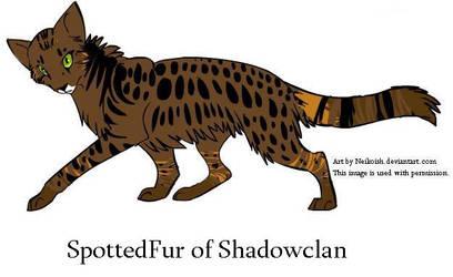 Spottedfur of Shadowclan