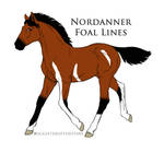 Foal 9027