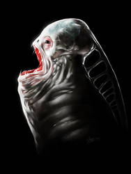 Unknown species from deep sea