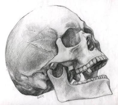 Possibly Human Skull