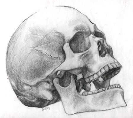human skeleton skull. images Human Skull Engraving