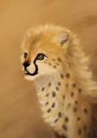Young Cheetah by Schoyhan