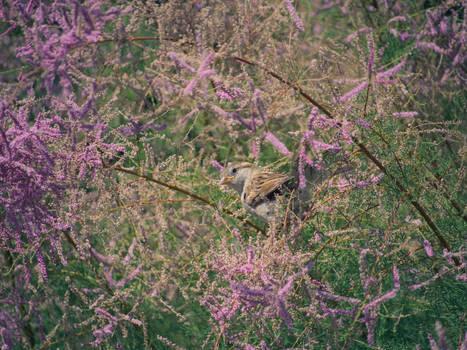 Sparrow in a garden paradise