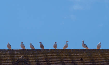 Gull roof