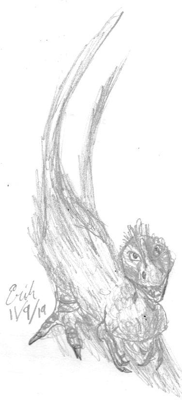 Syntarsus rhodesiensis, Dinovember 2019