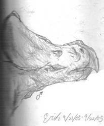 Male Protoceratops andrewsarchi