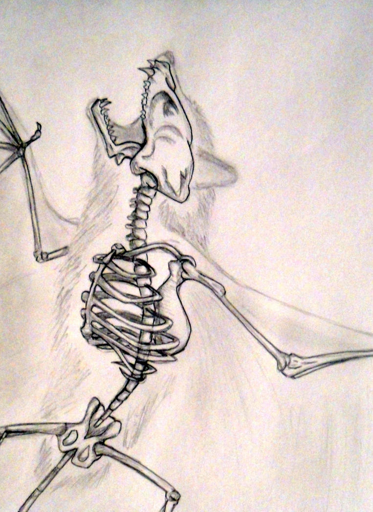 Bat skeleton drawing - photo#10