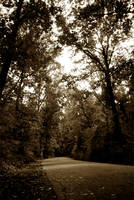 Into the Woods by AnthonyPresley
