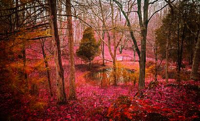 Wonderland by AnthonyPresley