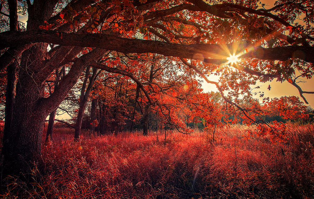 Forest of Fire by AnthonyPresley