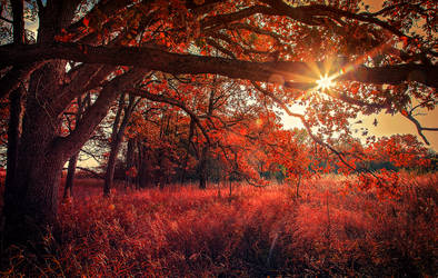 Forest of Fire