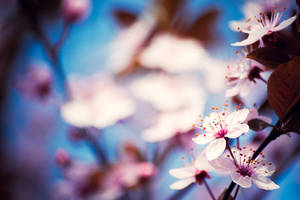 Bright spring flowers by quansie