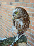babyowl profile