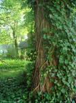 Ivy tree