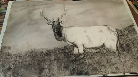 Elk in charcoal and wash by Madartink