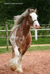 I'm the most beautiful horse