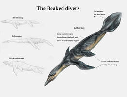 REP: The beaked divers by Ramul