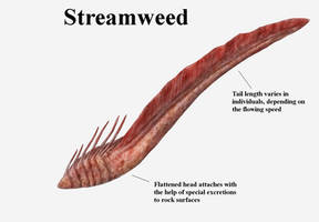 REP: Streamweed by Ramul