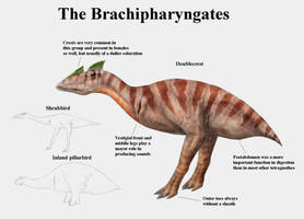 REP: The Brachipharyngates by Ramul