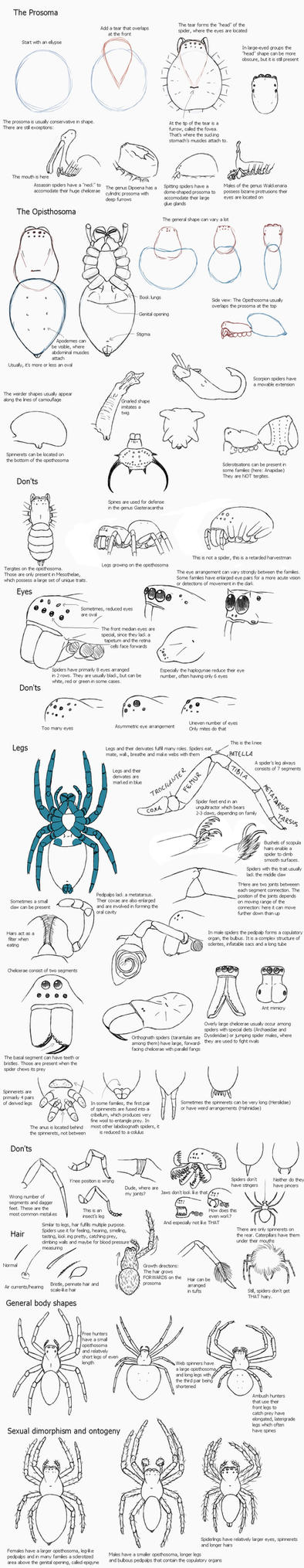 A guide to spiders by Ramul