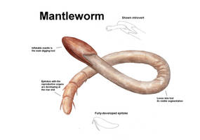 REP: Mantleworm by Ramul