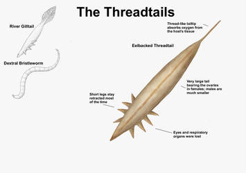 REP: The Threadtails by Ramul