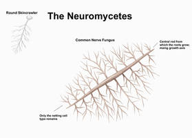 REP: The Neuromycetes