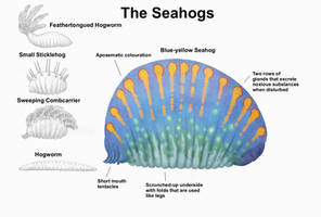 REP: The Seahogs by Ramul