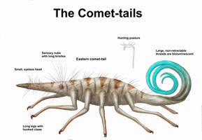 REP: The Comet-tails