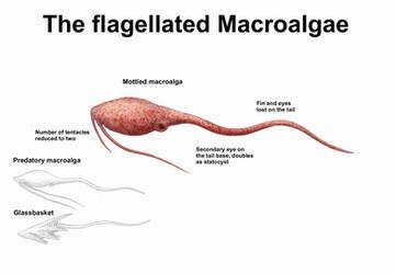 REP: The flagellated Macroalgae by Ramul