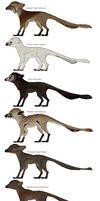 List of known imp species