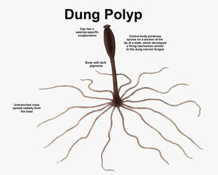 REP: Dung Polyp by Ramul
