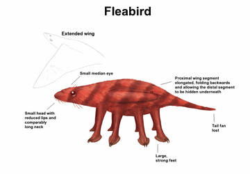 REP: Fleabird